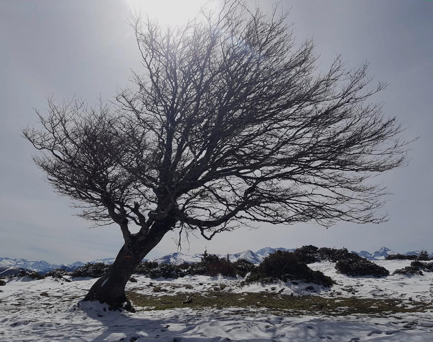 sway tree in winter